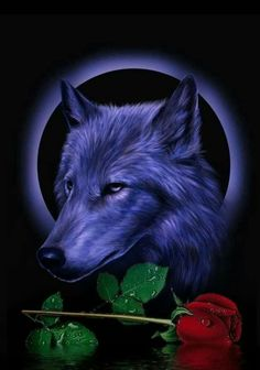 Tiger Wallpaper, Love Wallpaper, Wallpaper Quotes, Wolf Spirit Animal, Wolf Love, Wolf Pictures, Metal Magazine, Gothic Art, Mystic