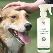 This easy-to-apply spray is ideal for soothing irritations, cleansing areas before applying dressings or to achieve a glossy and conditioned coat after bathing. The gentle Aloe Veterinary Formula can be diluted to cleanse irritated eyes or to clean dirty ears. It can also be used as a soothing leg wash to provide protection after exercise.