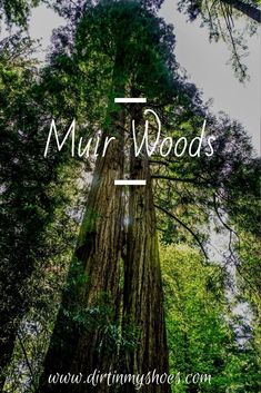 There are so many things to do in Muir Woods National Monument, but if this is your first road trip to the park it can be a little overwhelming. Don't worry, this list includes all the things you can't miss while on your vacation, plus a bunch of information to help you make your way around the park. Whether or not you like hiking and camping this list will make it easy to have a fun adventure. Fun Adventure, Greatest Adventure, Muir Woods National Monument, California National Parks, Death Valley, Amazing Adventures, Dream Vacations, Monuments, Don't Worry