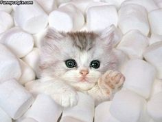 HALP! Iz not a smarshmallow!