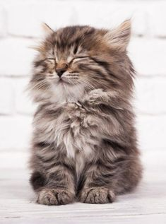 Jumping Kittens Game its Kittens For Adoption In La outside Kittens Game Furs per Cute Baby Animals Gif I Love Cats, Crazy Cats, Cute Cats, Cute Baby Animals, Animals And Pets, Funny Animals, Fluffy Kittens, Cats And Kittens, Cute Creatures