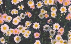 Daisies   30+ Pretty iPhone Wallpapers That Don't Cost a Thing   POPSUGAR Tech