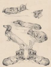 DACHSHUND LONG HAIRED CHARMING DOG GREETINGS NOTE CARD CUTE DOG SKETCHES