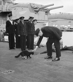 """Churchill with """"Jock."""" Churchill owned numerous cats, including a stray which was found on the steps of 10 Downing Street. He also had a cat named Nelson, named for Lord Nelson. Nelson sat in a chair next to Churchill in both the Cabinet and dining rooms. Winston Churchill, Crazy Cat Lady, Crazy Cats, Unsinkable Sam, Hms Prince Of Wales, Patricia Highsmith, Cat People, Cat Facts, Bizarre Facts"""