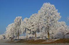 Bäume, Winter, Frost, Frostig, Raureif, Winterstimmung