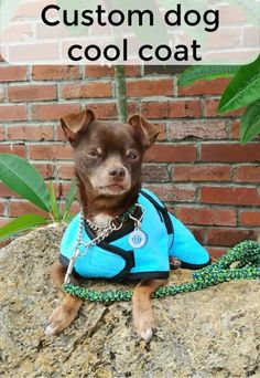 The size of your dog is not a problem when the pr Small Dog Coats, Small Dogs, Cool Coats, Dog Safety, Little Dogs, Dog Care, More Fun, French Bulldog, The Help