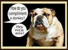 Funny bulldog!