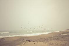 beach, beautiful, birds, ocean, photography