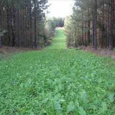 OutsidePride has different types of deer food plot seed available for purchase online. Get the best and more nutritious deer food plot seed out there. Bow Hunting Deer, Turkey Hunting, Deer Hunting Blinds, Coyote Hunting, Hunting Stuff, Pheasant Hunting, Archery Hunting, Deer Habitat, Food Plots For Deer