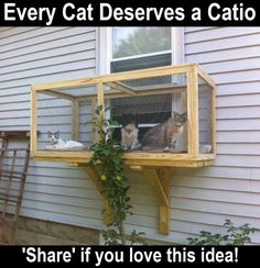 Don't want your kitty to get lost outside but still breathe fresh air and enjoy sunlight? A cat enclosure is the best solution! Catios also help to keep . Cat Window Perch, Cat Perch, Cute Kittens, Kittens Playing, Outdoor Cat Enclosure, Cat Cages, Rabbit Cages, Cat Playground, Screened In Patio