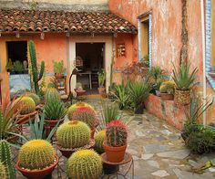 Cactus Gardner in Bernal, México art garden indoor plants Dry Garden, Indoor Garden, Outdoor Gardens, Cacti And Succulents, Planting Succulents, Mexico Cactus, Mexican Garden, Cactus Plante, Xeriscaping