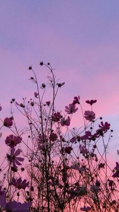 purple aesthetic You can get your purple room insp - aesthetic Dark Purple Aesthetic, Violet Aesthetic, Lavender Aesthetic, Sky Aesthetic, Aesthetic Colors, Flower Aesthetic, Aesthetic Pictures, Purple Aesthetic Background, Aesthetic Collage