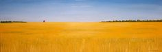prairie field - Bing Images