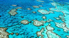The Great Barrier Reef is home to more than 1,500 species of fish