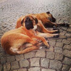 museudopão   Search Instagram   Pinsta.me - Explore All Instagram Online Search Instagram, Explore, Dogs, Animals, Museum, Animais, Animales, Animaux, Doggies