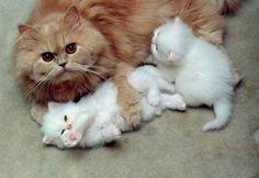 Protective Mum Cat & Kittens