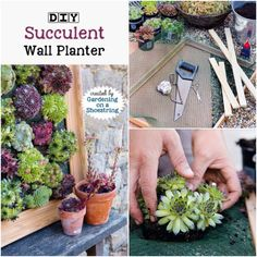 DIY Succulent Wall Planter | Empress of Dirt