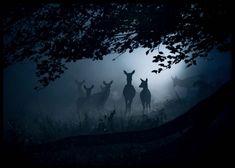 Deers in dawn Julisteet ryhmässä Julisteet  / Valokuvat @ Desenio AB (3136)