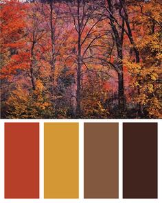 Autumn Color Palette (Trees in a Field art print by Joseph Holmes)