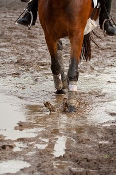 PODCAST: Can Boots or Wraps Prevent Scratches in Horses? - TheHorse.com | Dr. Ashley Embly of Rood & Riddle Equine Hospital offers her thoughts on if leg protection can prevent scratches. #horses #horsehealth #TheHorse #podcast #mud