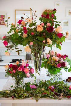{July} Scotch Rose