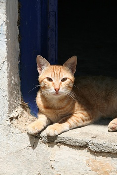"""The purrfect Greek cat"" in the village of Andia. Photo by Archway Andres, via Flickr"