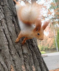 Quite the tail on this little squirrel