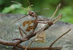 Roots: Mantid