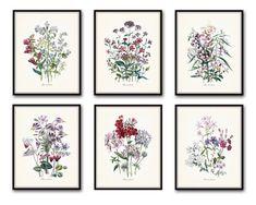 Fleurs de Jardin - « Fleurs du jardin » impression Set n ° 5 - tirages d'Art jet d'encre Cette impression ensemble dispose de 6 illustrations wildflower botanique antique qui ont été numériquement restaurées, renforcées et ajoutées à un fond clair neutre. Cadres sont fins d'affichage