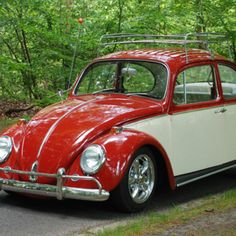 Love two-toned beetles#Repin By:Pinterest++ for iPad#