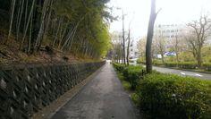 Bamboo Alley (Osaka, Japan) © beautyworkshop.gr