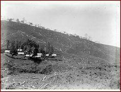 De ontginning van land voor koffieteelt op onderneming Soember te Djombang, Oost-Java Unknown date