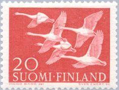 5 Whooper Swans (Cygnus cygnus)