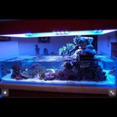 Reef aquarium saltwater fish