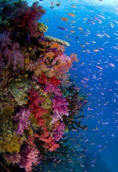 Bajo la superficie de la isla, la vida bulle alrededor del arrecife...