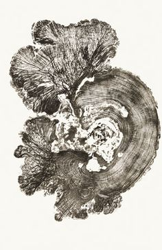 Somewhere Between Art and Nature Woodcut prints by Bryan Nash Gill