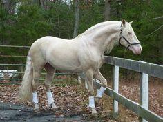 Image result for Camarillo horse