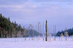 Seitseminen National Park, Finland.