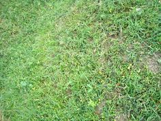 Lawn Care Tips- Want a Green Luscious Lawn? – Gardeners Palace
