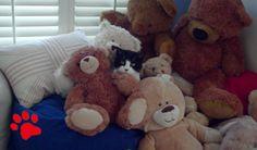 Hast Du Deine Katze schon einmal gesucht? ;-) #ad