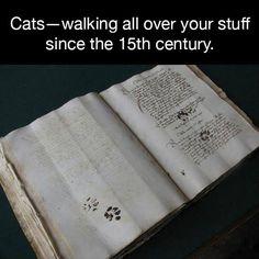 meow...