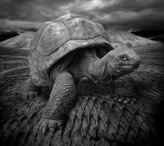 """""""Don'g look at me, I'm not ready"""" - Photography by yves.lecoq"""