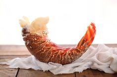 Lobster-Mac-n-Cheese-foodiecrush.com-004