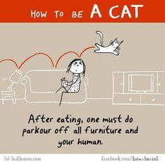 Cats With Brain Freeze Cute Cats, Funny Cats, Funny Animals, Hilarious, Crazy Cat Lady, Crazy Cats, Gatos Cats, Online Comics, Dog Cat