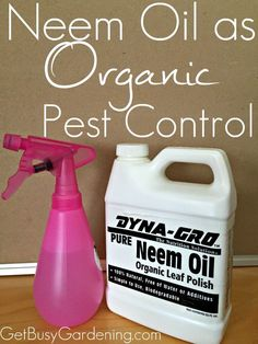 My battle with houseplant pests has become much easier since I started using Neem oil, and I highly recommend you get some too. Read this post I wrote about Neem Oil as Organic Pest Control | GetBusyGardening.com