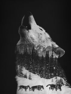 Howling Wolf Art Print by Andreas Lie | Society6