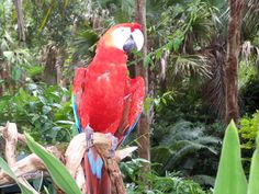 beautiful tropical birds at Zoo World and Gulf World are on display and presenting shows daily