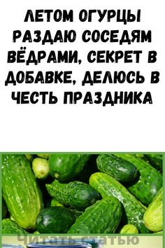 Small Gardens, Cucumber, Vegetables, Succulents, Places, Russian Cuisine, Little Gardens, Vegetable Recipes