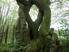 Unusual tree formation