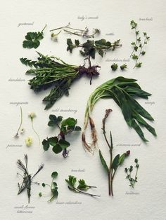 fork and flower: wild herb gathering